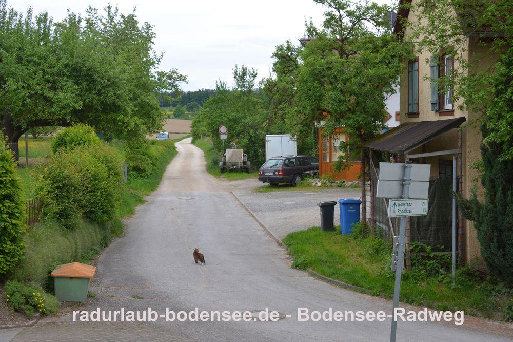 Radurlaub Bodensee - Bodensee-Radweg in Stahringen