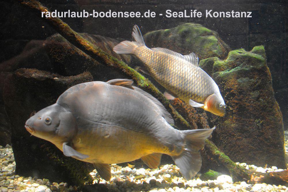 Radurlaub am Bodensee - Sealife in Konstanz