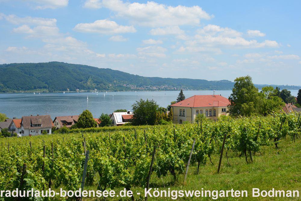 Wein am Bodensee - Königsweingarten in Bodman