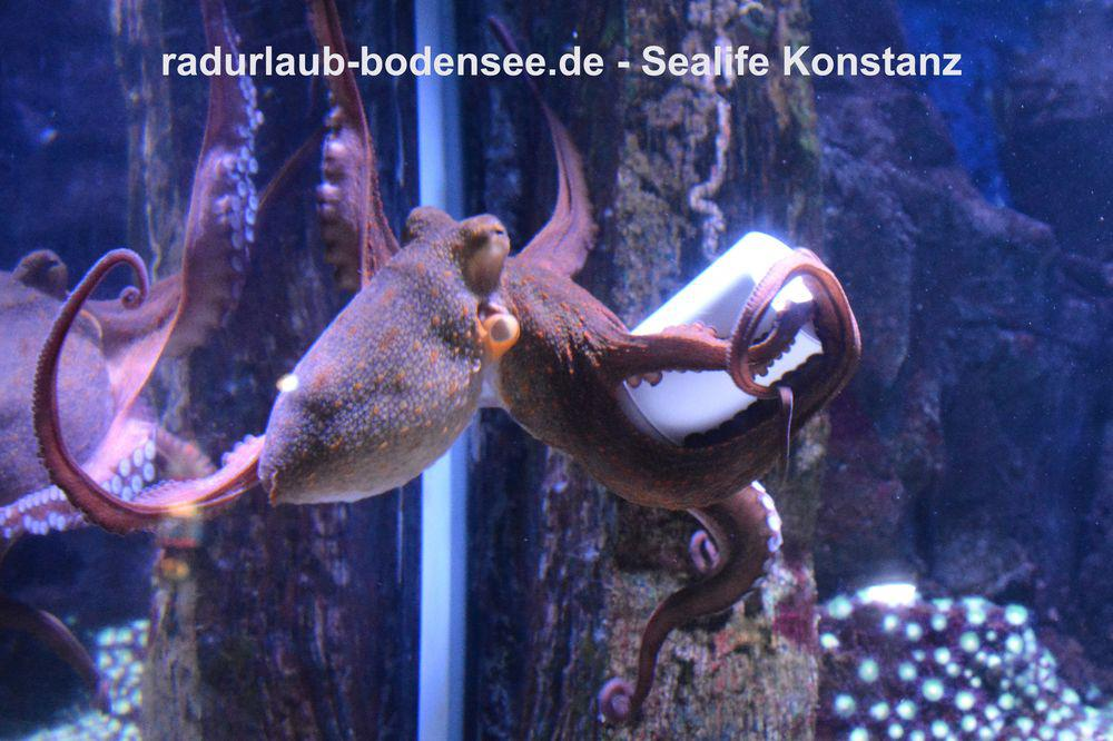 Cycling Along Lake Constance - SeaLife Centre in Constance