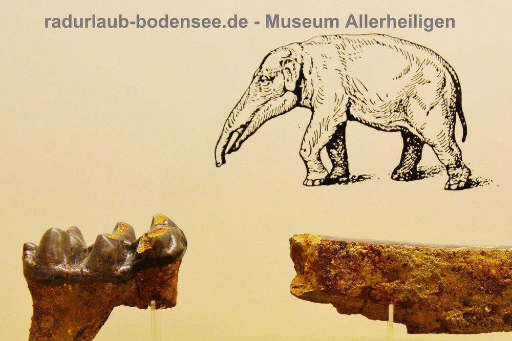 Museum Kloster Allerheiligen Schaffhausen - Naturmuseum