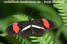 Insel Mainau - Schmetterlingshaus