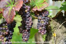 Wein am Bodensee